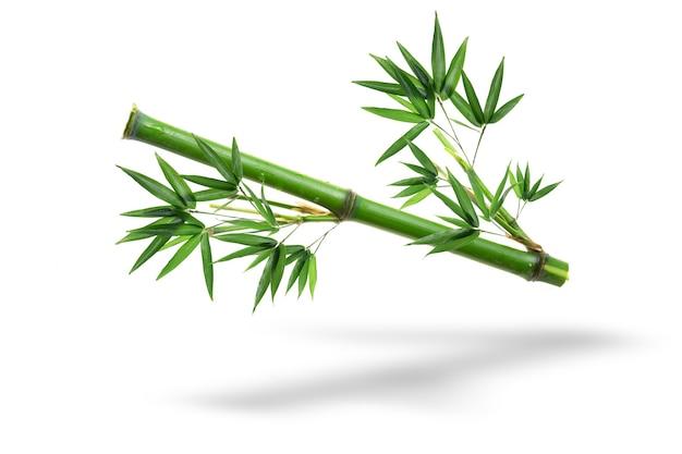 白い背景で隔離の竹の枝