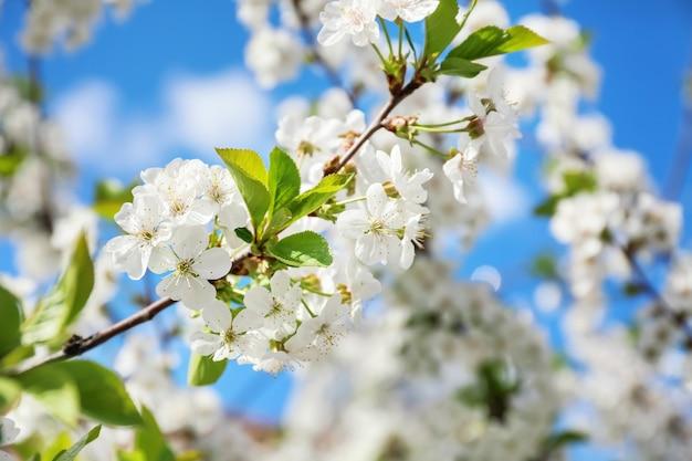晴れた日の美しい花の咲く木の枝