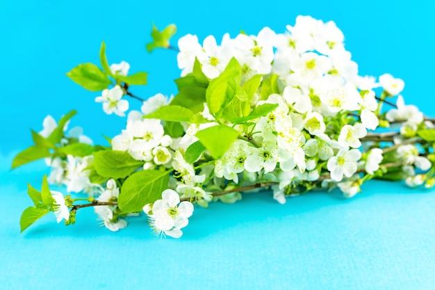 明るい青いtourquase紙の背景に開花する白い春のリンゴの木の花の枝