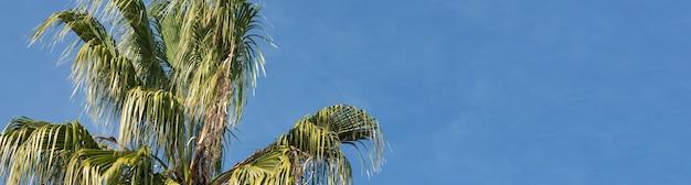 夏の青空の下でナツメヤシの枝