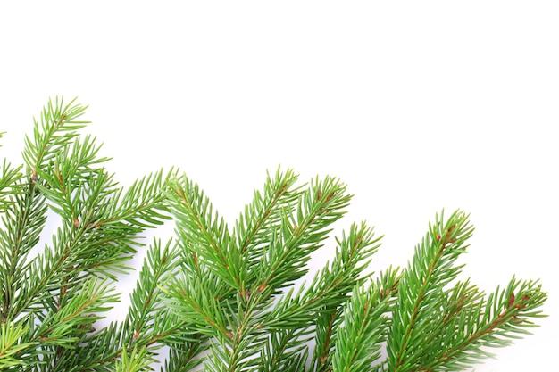 白い背景で隔離のモミの木の枝クリスマス新年冬