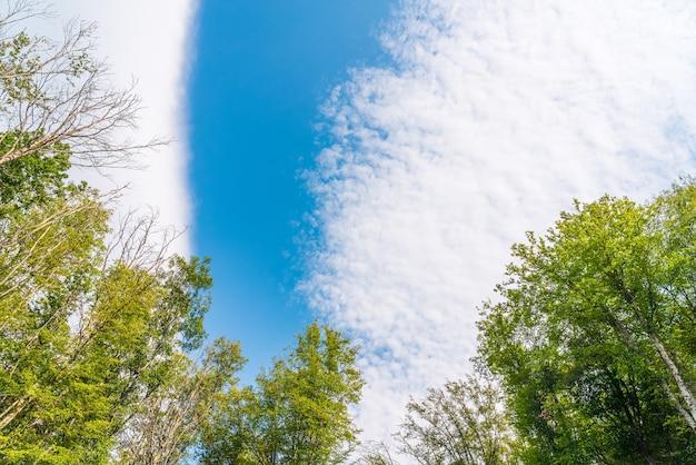 Ветви зеленых деревьев на фоне голубого неба.