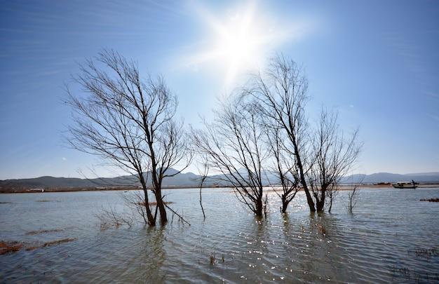물에 leafless 나무의 가지