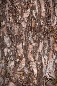 도시 공원에서 비행기 나무의 가지