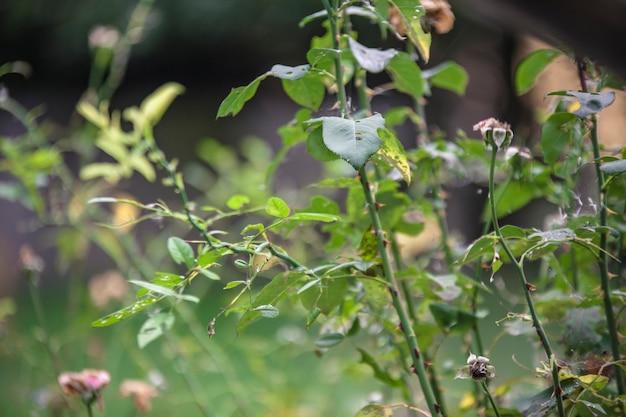 가을 묵주 식물의 가지