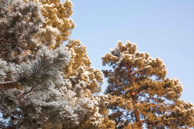 낮에는 겨울 눈 덮인 숲에서 나무의 가지