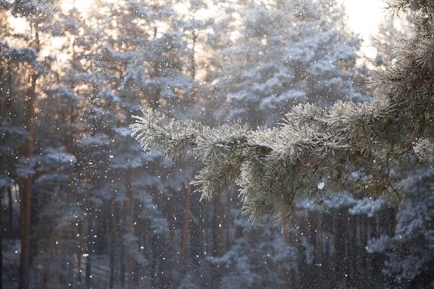Ветки деревьев в зимнем снежном лесу в дневное время