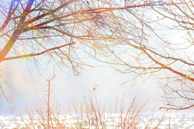 Ветви деревьев зимой против солнца в ясный светлый день_