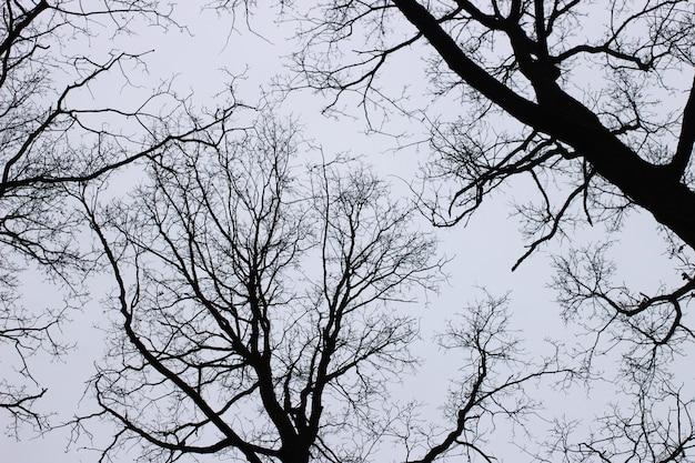 Ветки деревьев без листьев