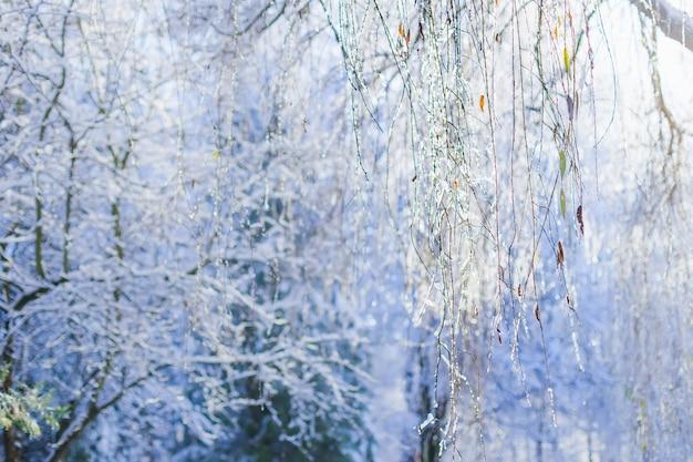 柳の木の枝は氷で覆われています。冬の森
