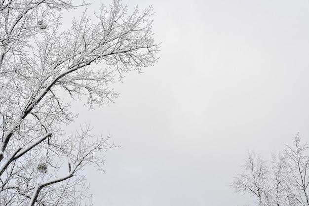 雪のフレーム、灰色の空の背景にスペースをコピーと冬の木の枝