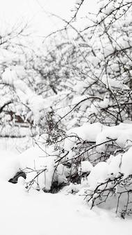 晴れた凍るような朝の雪の下で若いリンゴの木の枝、背景のフェンス