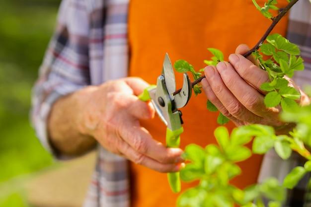 나무에 가지. 코티지 집 근처에 서있는 나무에 가지를 자르기 위해 펜치를 사용하여 남성 손을 닫습니다