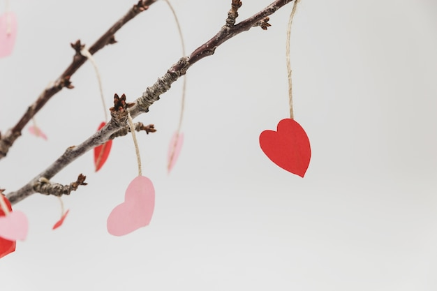 Branches of a plant with hanging hearts