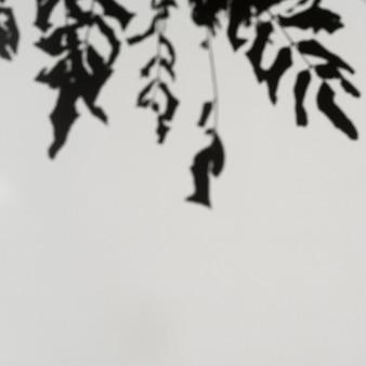 淡い灰色の背景に枝の影