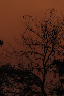 Branches silhouette at sunset