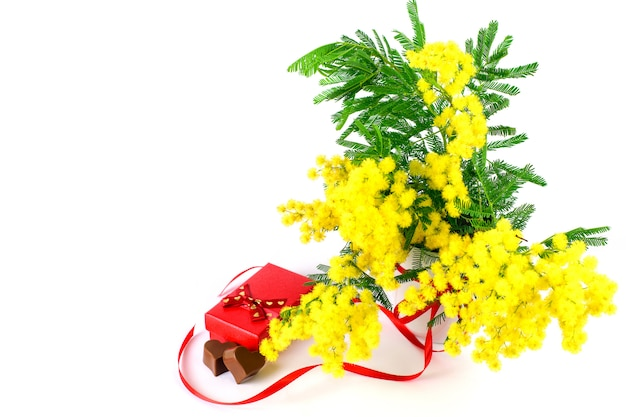 Branches of spring fresh mimosa on the white background