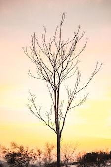 Branches of thin leafless tree against colorful sunset sky in winter evening in countryside