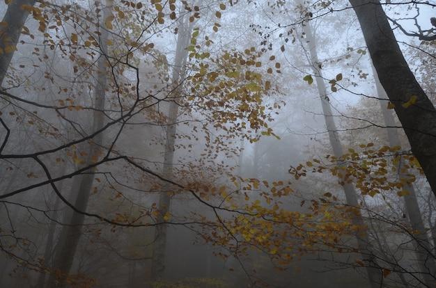 Branches and trees in a forest with fog, autumn (montseny, catalonia, spain)