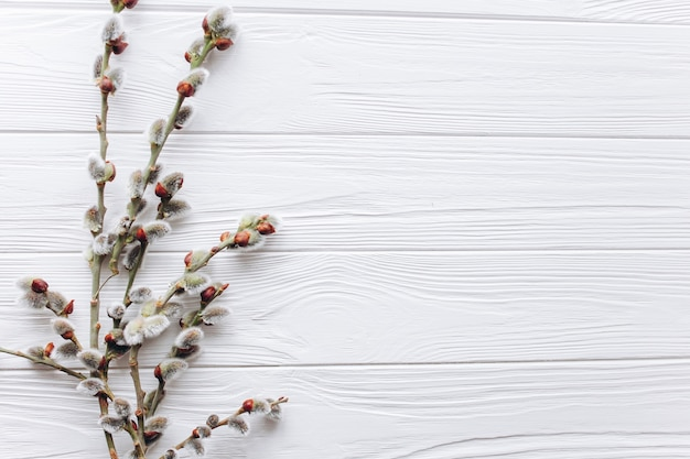 Branches twigs on a wooden background