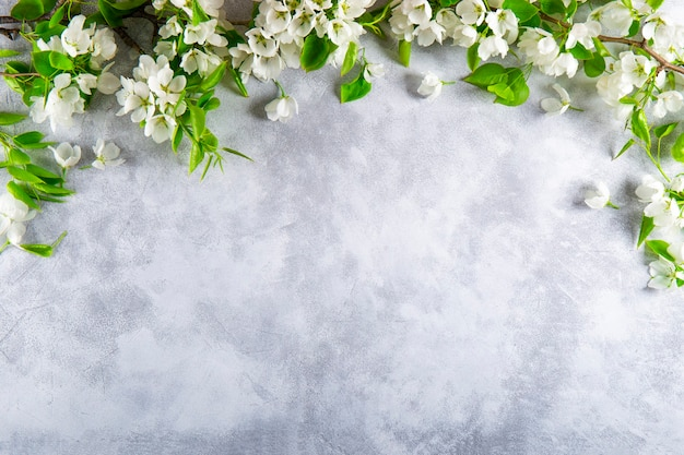 Branches of a white blooming apple tree on a light gray background top view