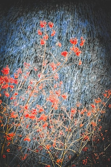 Branches with red viburnum on a gray background with filter