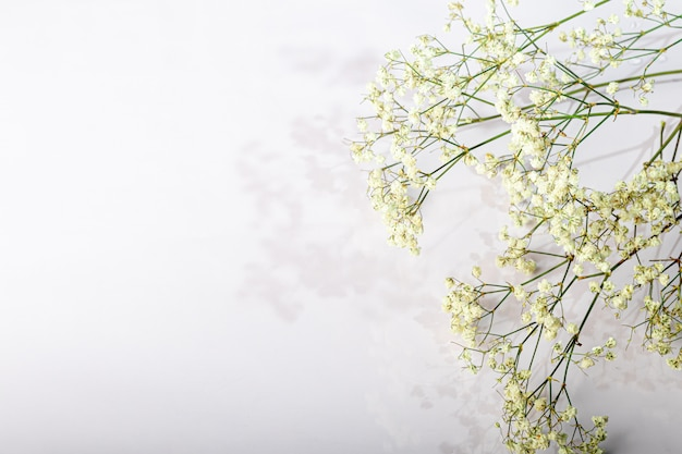Branches with white dried flowers on a white background