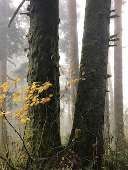 오레곤, 미국에서 나무에 둘러싸인 노란 잎이있는 가지