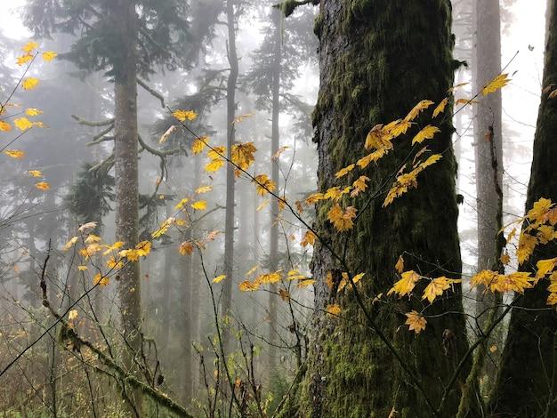 米国オレゴン州の木々に囲まれた黄色の葉を持つ枝