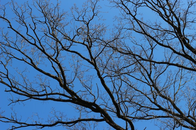 Branches without leaves and blue sky