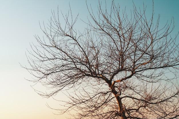 青い夕焼け空を背景に優雅な木の葉のない枝。