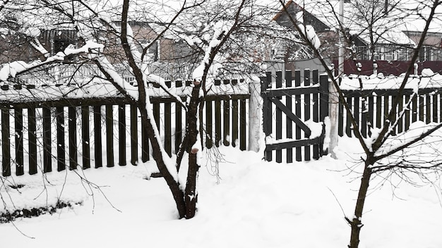 Branches of young apple tree under snow in sunny frosty morning, fence in the background