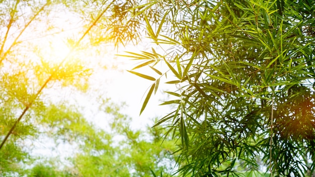 Branching bamboo leaves adjust the shade of the sky