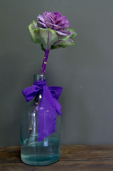 Brassica oleracea capitata or decorative cabbage in a glass vase with a purple ribbon on a grey background, greeting card or concept
