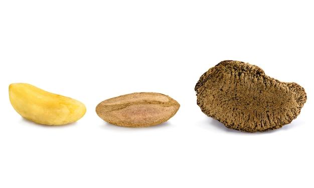 ブラジルナッツ、殻付きと殻付き、白い背景に