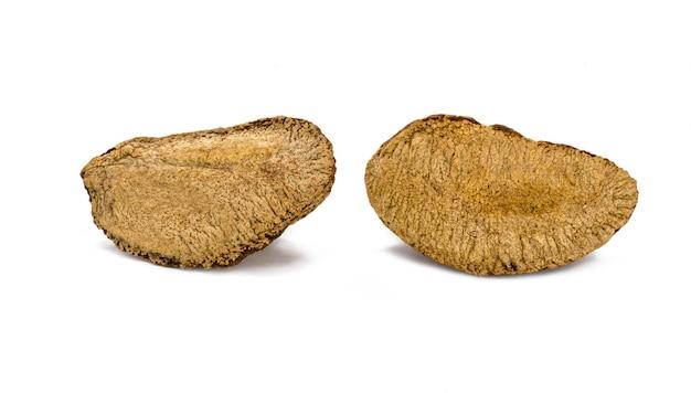白い背景の上のシェルとブラジルナッツ、典型的なブラジルナッツ