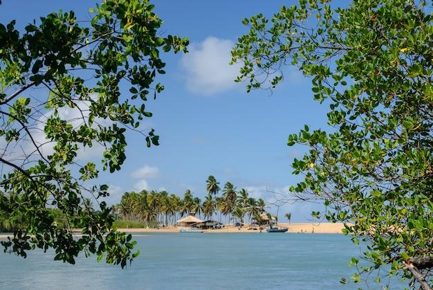 Joao pessoa paraiba brazil 근처의 barra de camaratuba 해변의 브라질 해변과 그로브