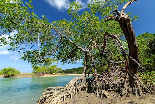 ジョアンペソアパライバブラジル近くのバラデカマラトゥバビーチのブラジルのビーチとアングローブ