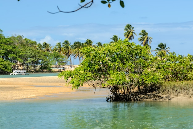Brazilian beach and angrove at barra de camaratuba beach near joao pessoa paraiba brazil