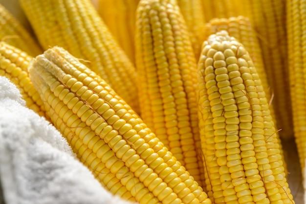 かごの中のブラジルの新鮮な有機トウモロコシの穂軸