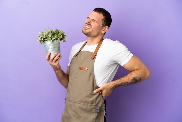 Бразильский садовник, держащий растение на изолированном фиолетовом фоне, страдает от боли в спине из-за того, что приложил усилие