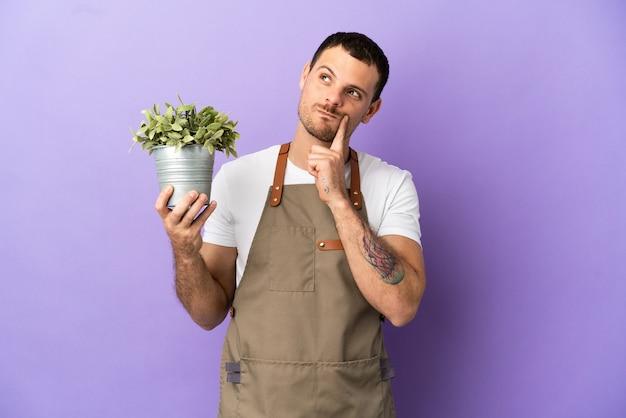 見上げながらアイデアを考えて孤立した紫色の背景の上に植物を保持しているブラジルの庭師の男