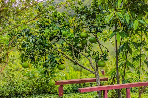 Brazilian outdoor plants