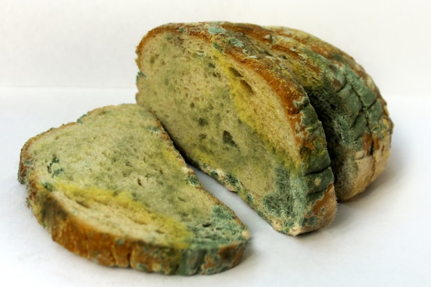 Bread covered with mold, a pile of spoiled wheat bread. close-up photo of a pattern of multicolored mold.
