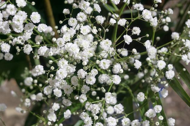 Breath flowers