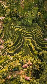鮮やかな緑の熱帯雨林の息をのむような空中写真