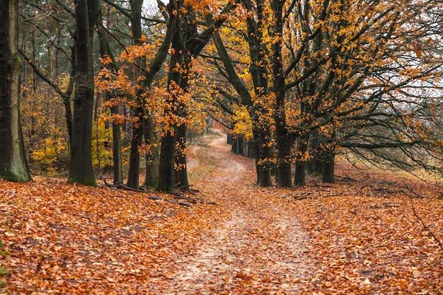 森の中の小道と地面に葉がある息をのむような秋の景色