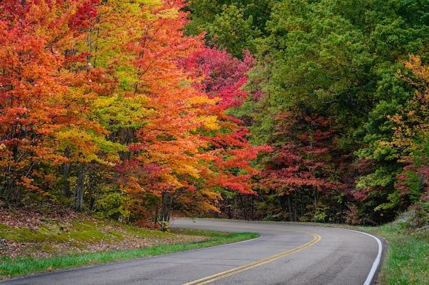 Захватывающий осенний вид на дорогу, окруженную красивыми и красочными листьями деревьев.