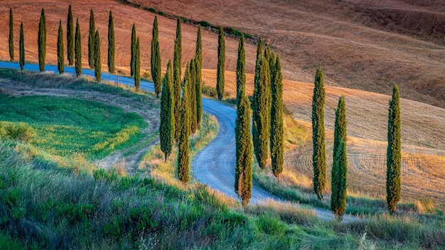 Breathtaking high angle shot of a path surrounded by poplars in the hills