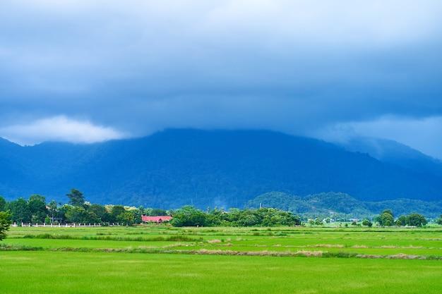 息をのむような自然の風景。緑の田んぼと背景の山の上に曇った紺色。
